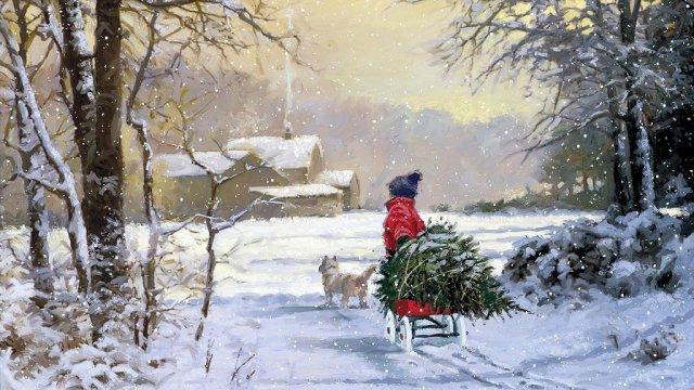 Как нужно возить новогоднюю елку